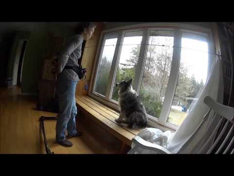 How to Stop Alert Barking