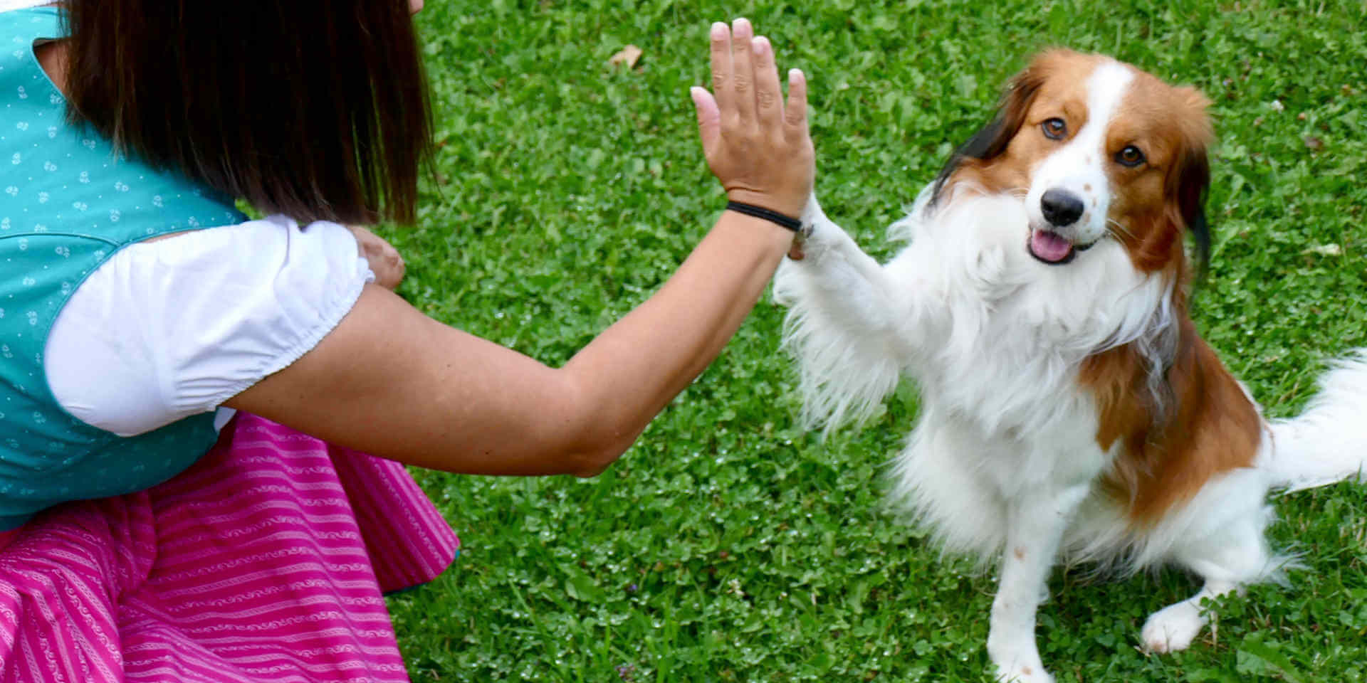 how to train your puppy to do tricks