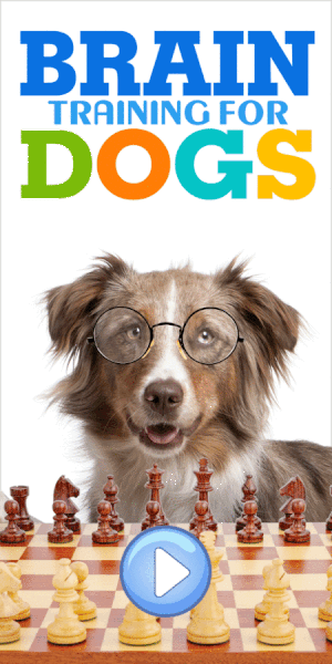 Visit the Brain Training For Dogs Website